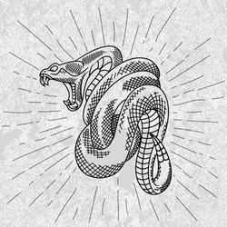 Viper snake in star rays with grunge background. Hand drawn illustration in outline.