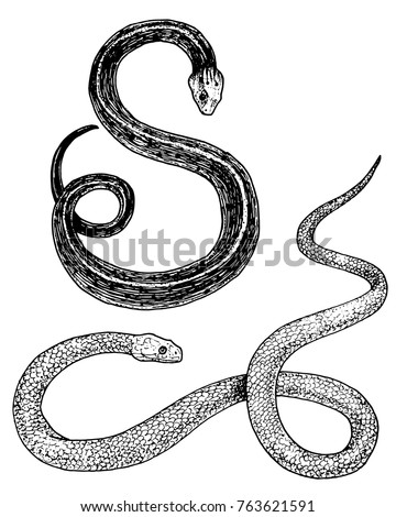 viper snake serpent cobra and
