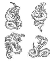 Viper snake set. Hand drawn illustrations in engraving technique isolated on white background.