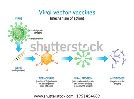 Viral vector vaccines. Vaccine use a safe virus to insert pathogen genes in the cell to produce specific antigens and stimulate an immune response. mechanism of action Сток-фото ©