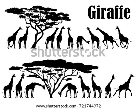 Visual drawing silhouettes of giraffe family animal wildlife collection in Africa or Savannah abstract black and white vector illustration