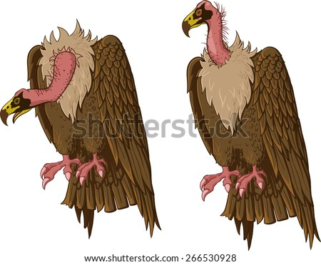 Vulture sitting. Neck in two positions