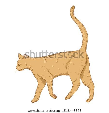 Walking Cat. Vector Cartoon Feline Illustration