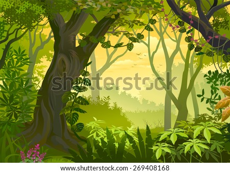 Warm climatic Jungle Illustration