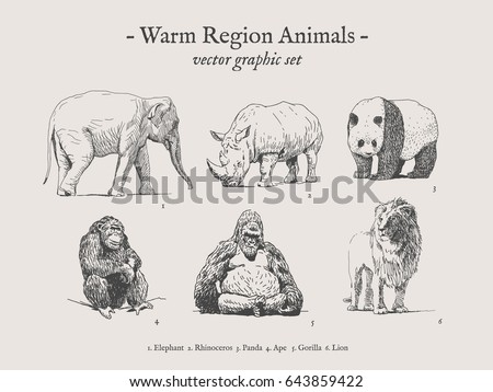 warm region animals drawings