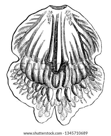 warrea is a genus of flowering