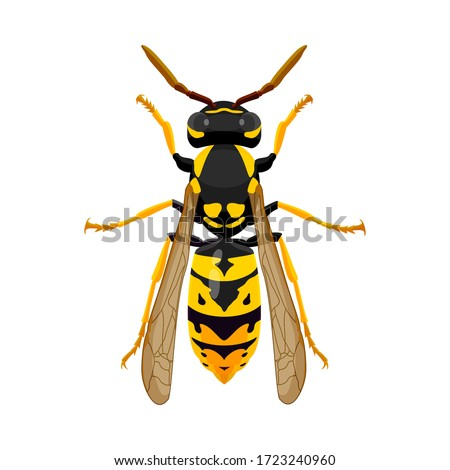 wasp isolated image on a white