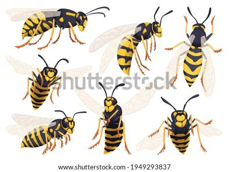 wasp vector cartoon icon set