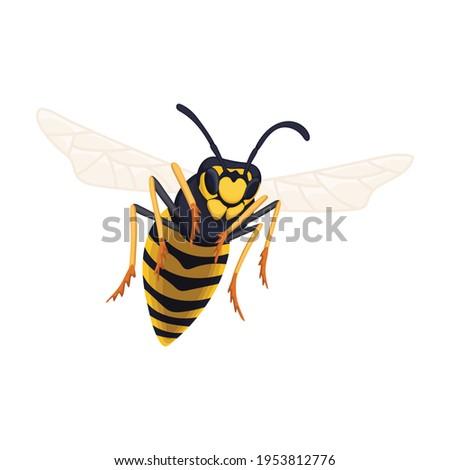 wasp vector cartoon icon