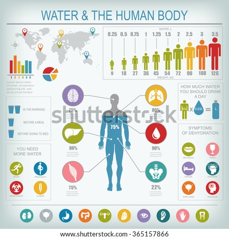 water and human body