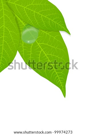 Water drop on green leaves background vector