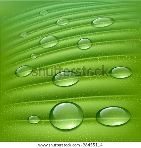 Water drops on fresh green