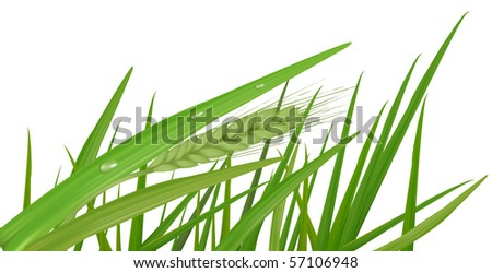 Water drops on the green grass. Vector
