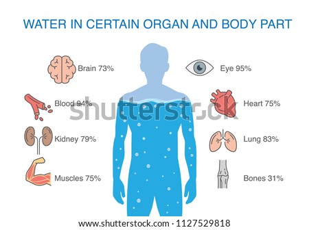 Water in certain organ and body part of human. Illustration about medical.