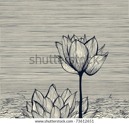 water lily composition