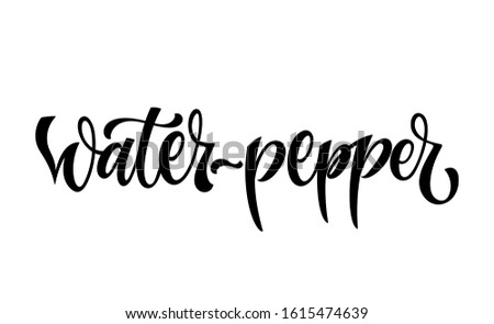 Water-pepper - vector hand drawn calligraphy style lettering word. Isolated script spice text label. Labels, shop design, cafe decore etc