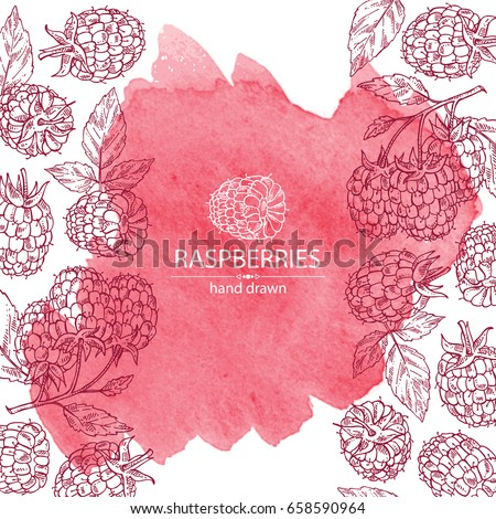 Watercolor background with a raspberry and branch of raspberry. Vector hand drawn illustration