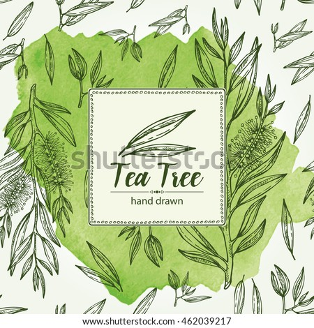 Watercolor background with tea tree. Cosmetics and medical plant. hand drawn