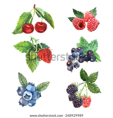 watercolor berry set with
