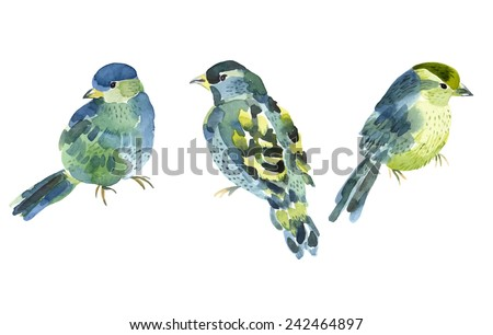 watercolor bird collection for
