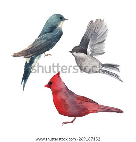 watercolor bird set  red