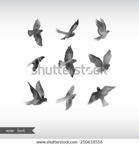 watercolor birds.