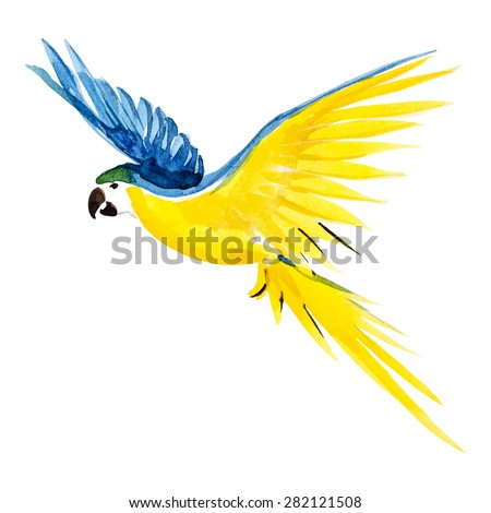 watercolor blue yellow parrot