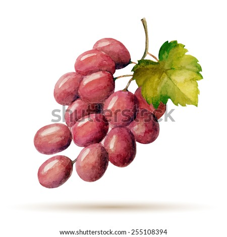 watercolor branch red grapes