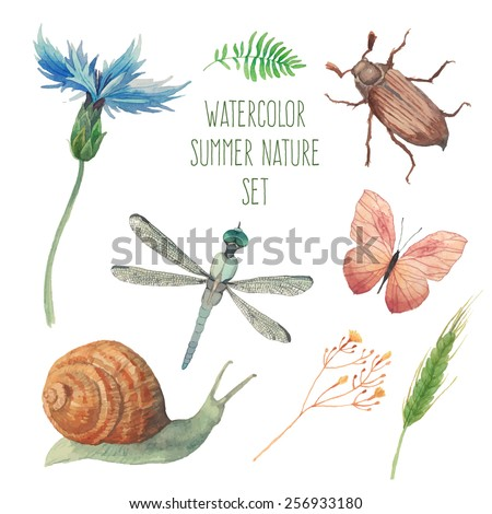 Watercolor butterfly, chafer, snail, field herbs, flowers and plants and dragonfly set. Vector artistic insects and floral elements in vector. Hand painted clip art