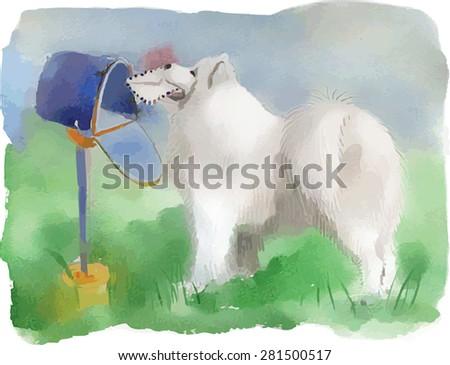 watercolor dog husky  samoyed
