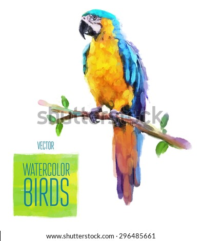 watercolor exotic bird isolated