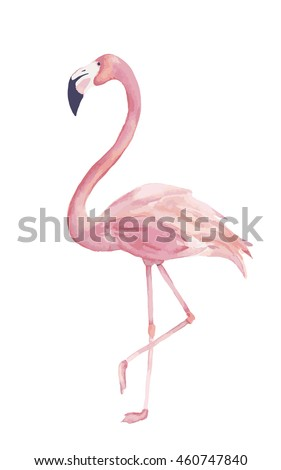 Watercolor exotic flamingo. Summer decoration print for wrapping, wallpaper, fabric, card. Vector illustration