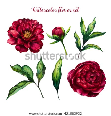 Watercolor flower peony, flowers and leaves peonies, watercolor rose isolated on white background, floral set, vector design for invitation, wedding, save the date, card, holiday, summer design