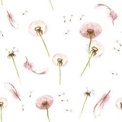 Watercolor hand drawn seamless pattern with feathers and spring tender flowers - dandelions on the white background
