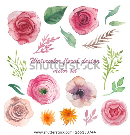 Watercolor herbs, ranunculus, anemone, roses elements set. Vintage leaves, flowers and branches. Vector hand drawn design illustration