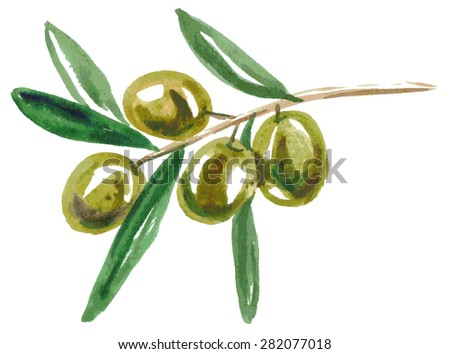 Watercolor illustration on a white background branch of green olives