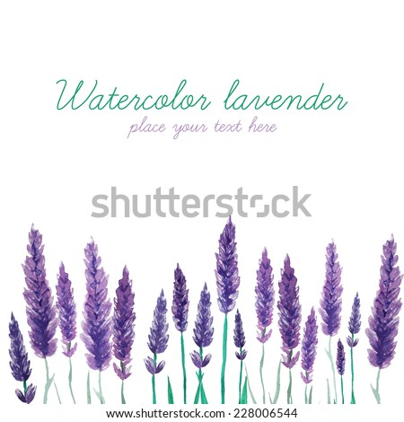 watercolor lavender field