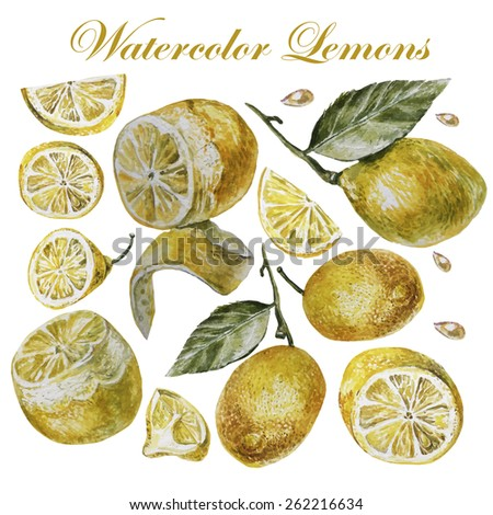 Watercolor lemon isolation on a white background. Vector illustrations.
