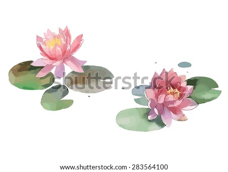 watercolor lily isolated on