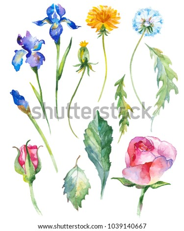 Watercolor painted collection of flowers. Hand drawn flower design elements isolated on white background.