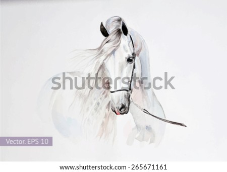 watercolor painting of andalusian horse portrait. Vector, EPS 10