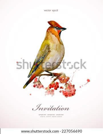watercolor painting wild bird