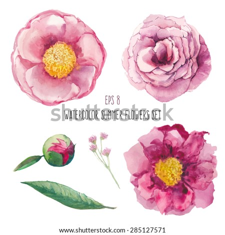 Watercolor peony, wild flowers and roses elements set. Artistic leaves, flowers and branch. Vector hand drawn botanical illustration. Realistic isolated objects on white background