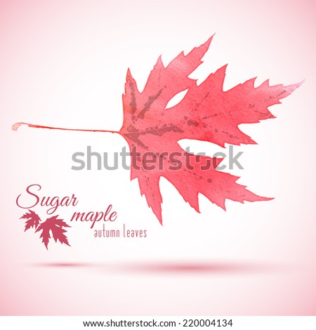 watercolor red autumn leaf of