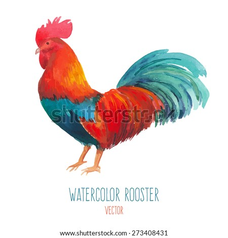 watercolor rooster hand drawn
