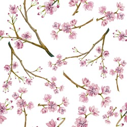 Watercolor sakura pattern. Seamless natural texture with blossom cherry tree branches. Hand drawn japanese flowers on white background