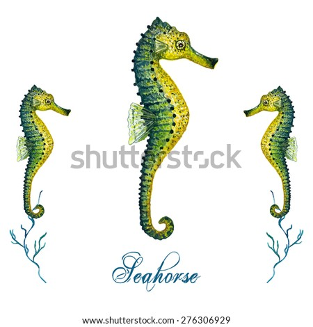 watercolor seahorse isolated on