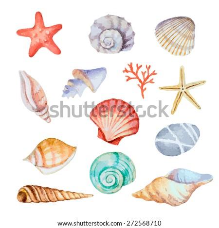 watercolor set of seashells on