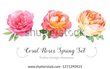watercolor style coral garden