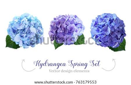 watercolor style hydrangea...